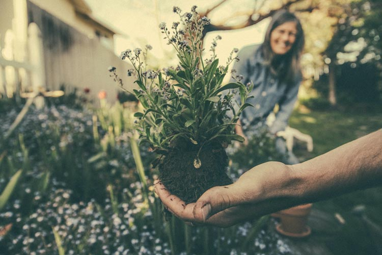 Grandma and Gardening